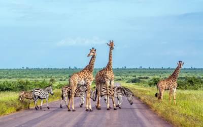 דרום אפריקה 4