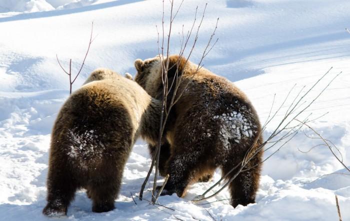 לאפלנד - פארק חיות הבר ברנואה