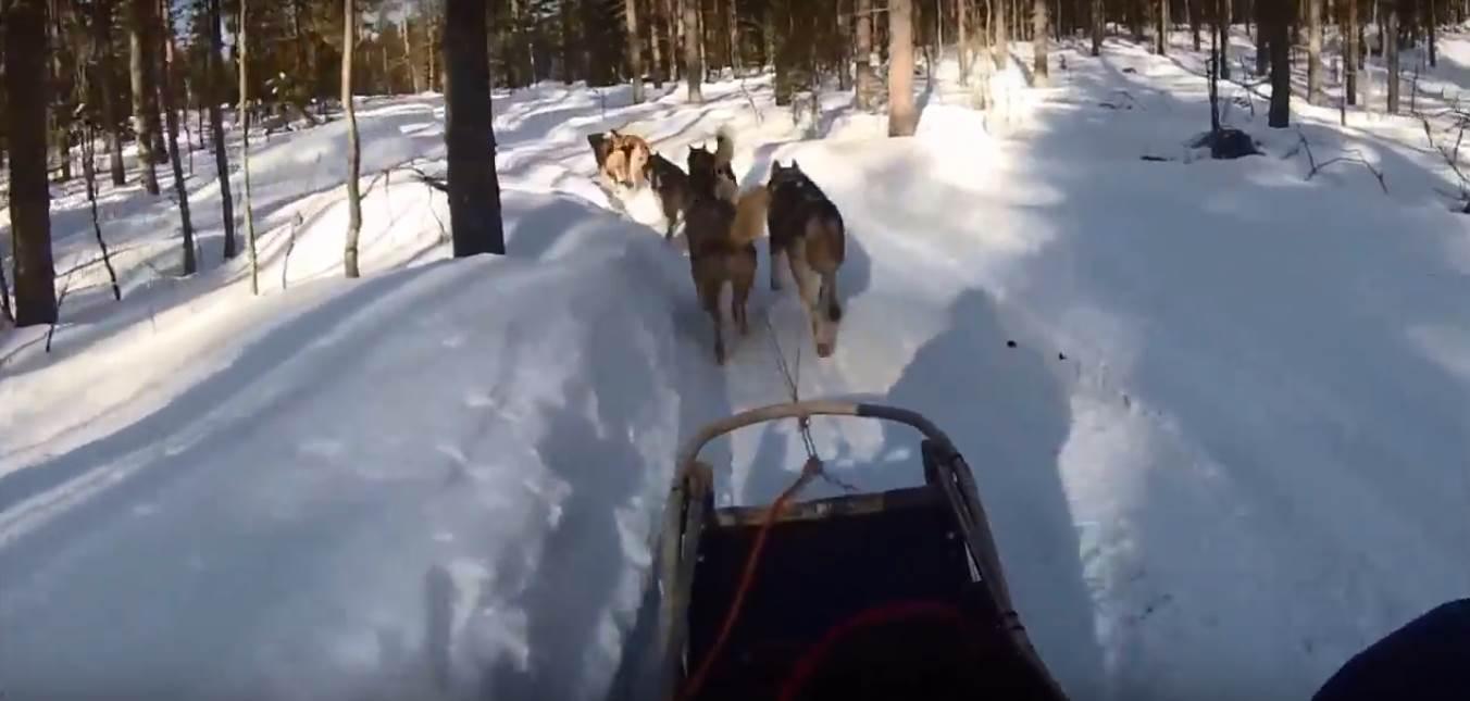 לפלנד - מזחלת כלבים