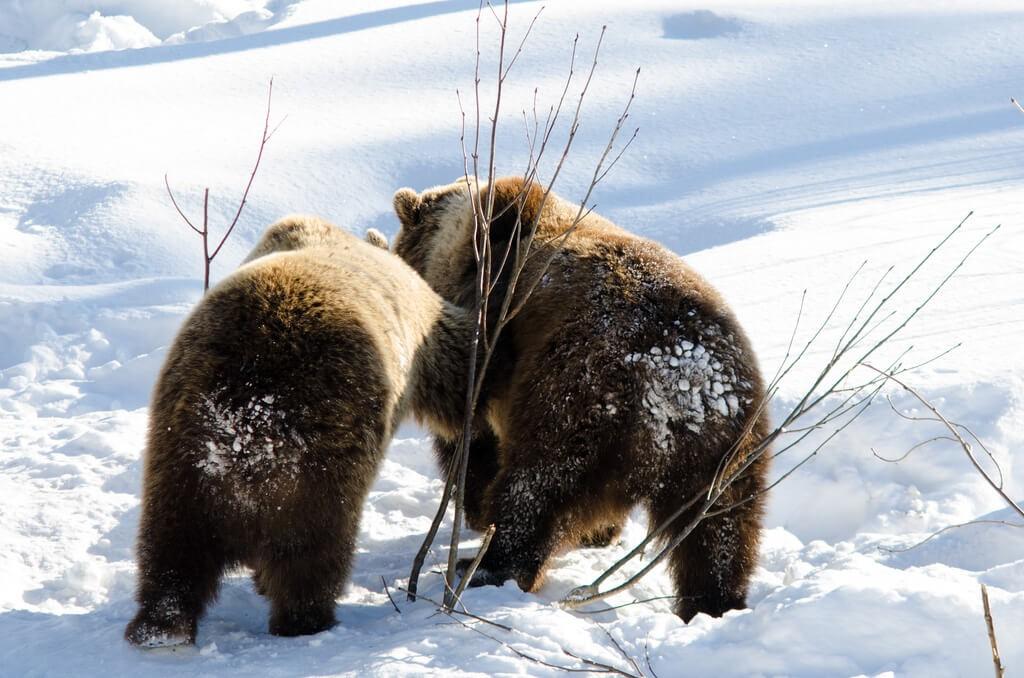 לפלנד - פארק חיות הבר ברנואה